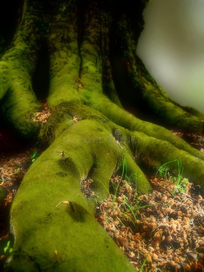 Dove gli elfi vivono?. fotografie stock