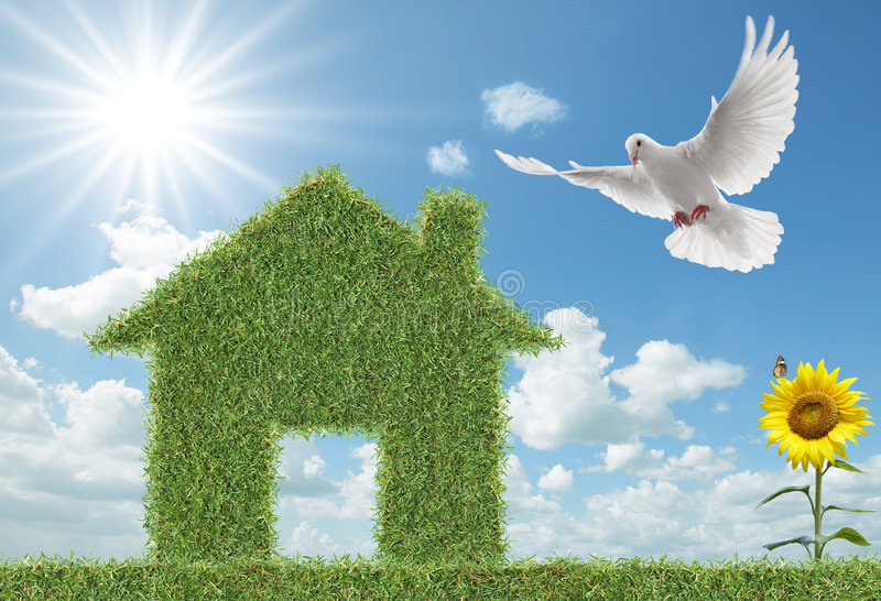 Dove and green grass house. White dove flying towards green grass house