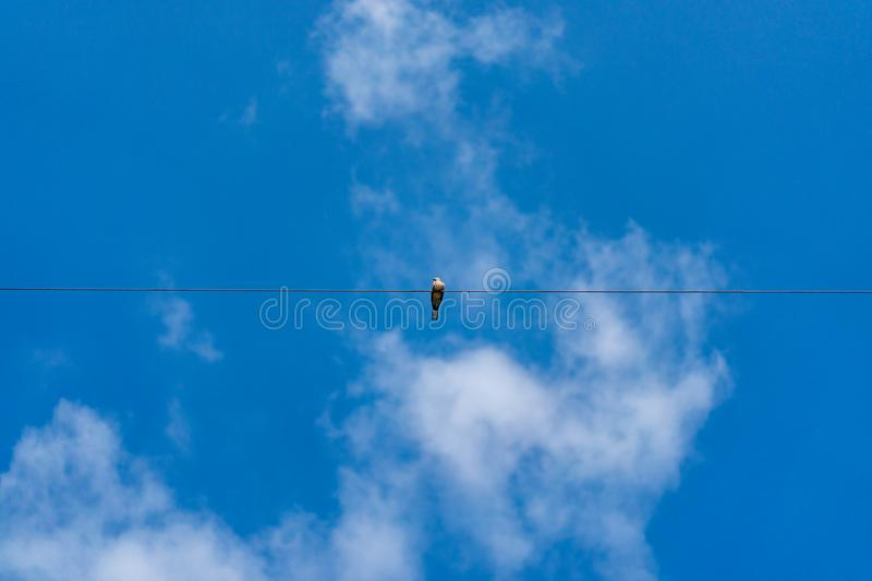 Dove hang on to electric single cable line alone in the clear sky stock photo