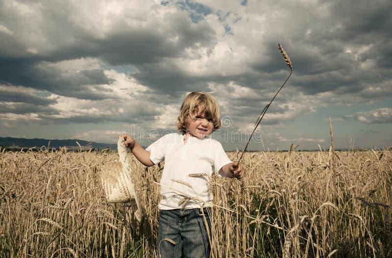 Dove Il Pane Viene Fotografia Stock Libera da Diritti