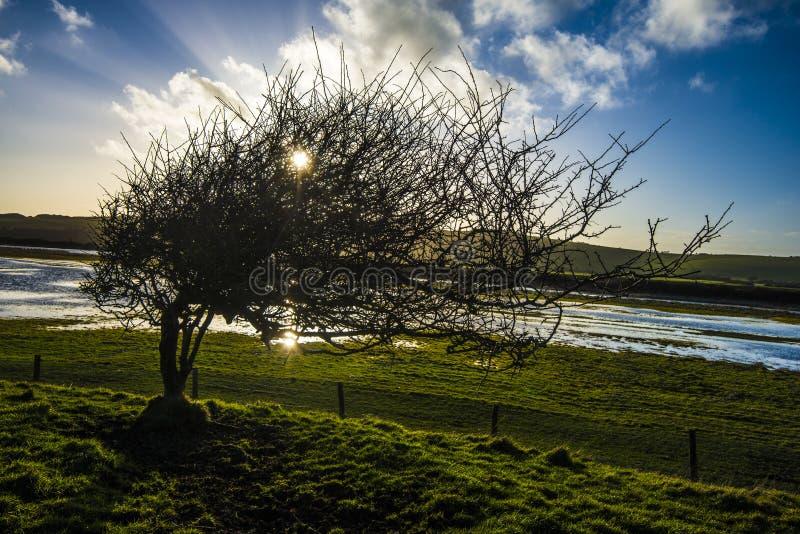 Dove il vento soffia fotografia stock libera da diritti