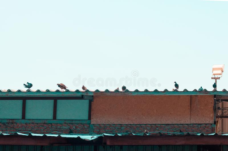 Dove over roof.Technical cost-up. stock photo
