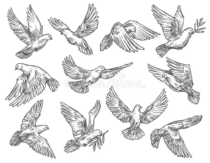 Pigeon flying with olive branch, vector sketch royalty free illustration