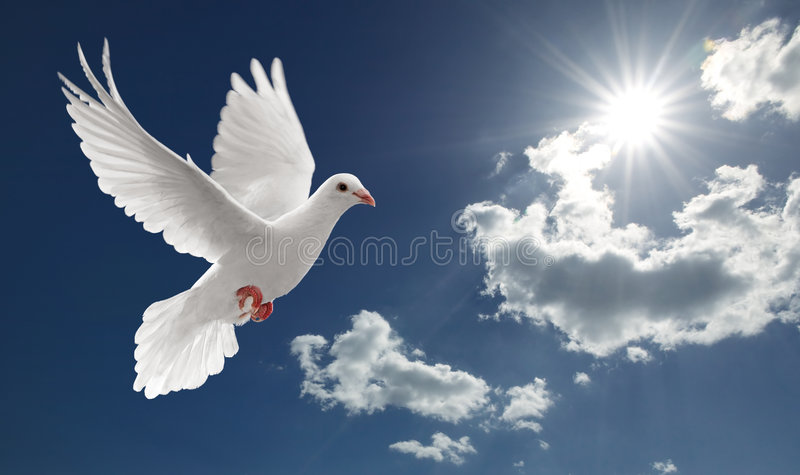 Dove in the sky stock images