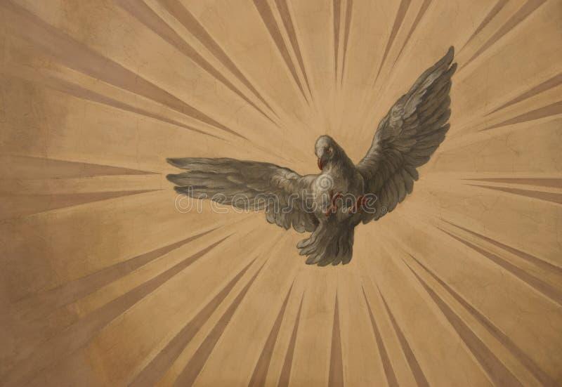 Dove in the sun