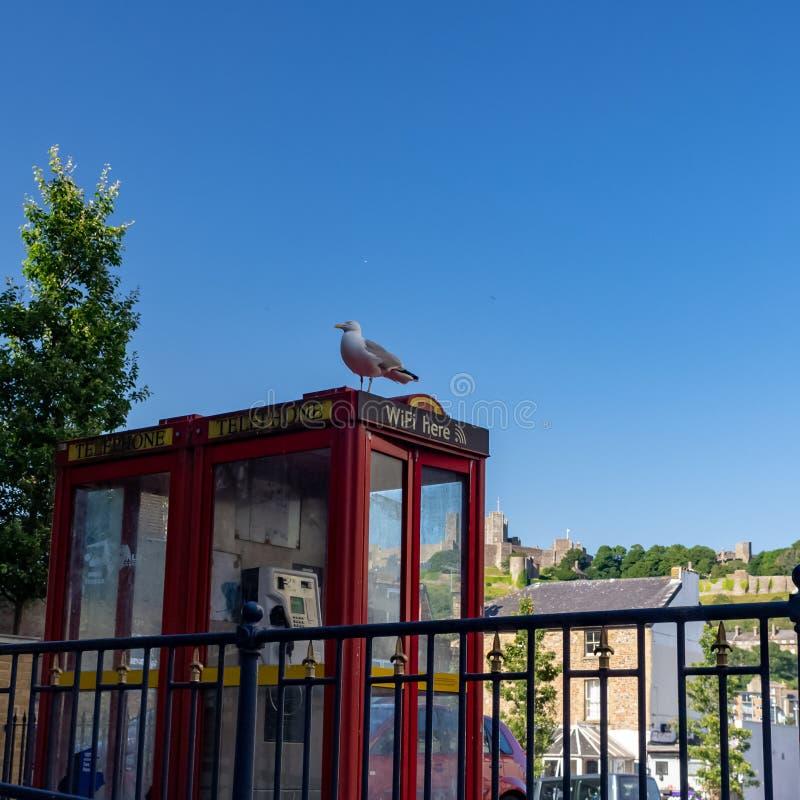"""DOVER, †BRITÁNICO """"30 de junio de 2018: La gaviota se sienta en una cabina de teléfono británica roja fotografía de archivo libre de regalías"""