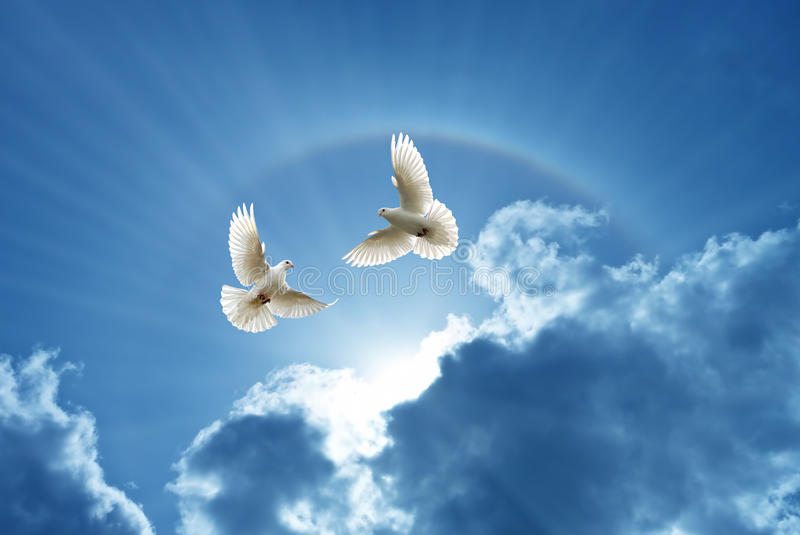 Doves in the air symbol of faith over shiny background royalty free stock photography