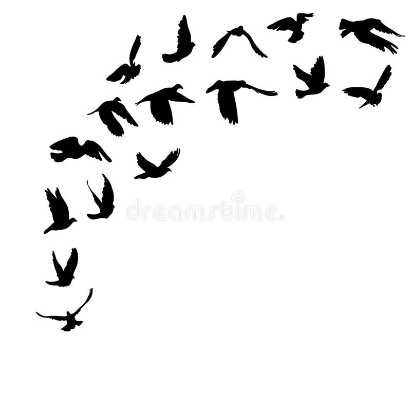 Free Doves And Pigeons Set For Peace Concept And Royalty Free Stock Photos - 47589598