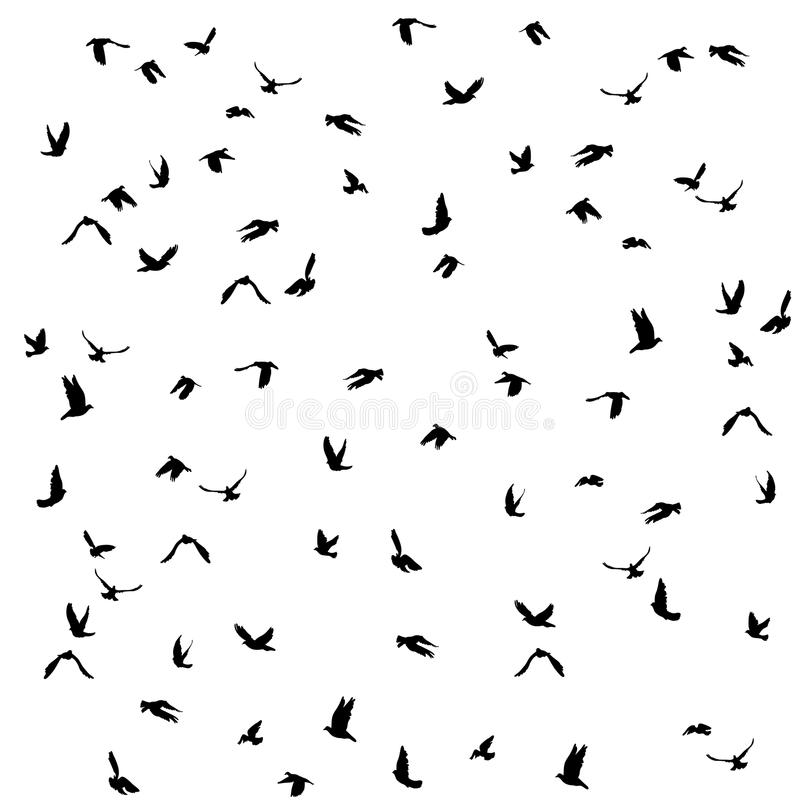 Free Doves And Pigeons Set For Peace Concept And Stock Photos - 54925383