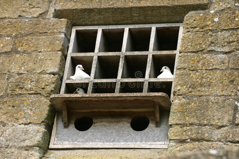 Dovecote built into a wall. White doves in a dovecote built into wall with nesting boxes royalty free stock photography