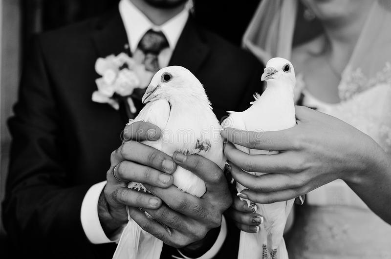 Doves at hand royalty free stock image