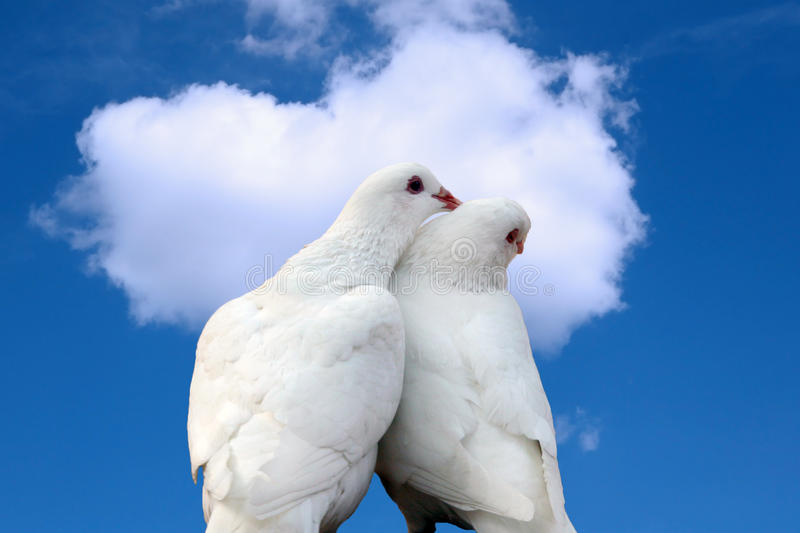 Doves in love. White doves in love against blue sky with heart shape cloud