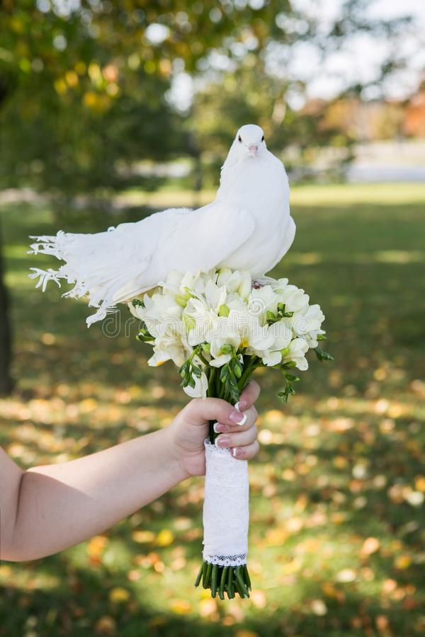 Doves on wedding bouquet. Outdoor near forrest stock photos