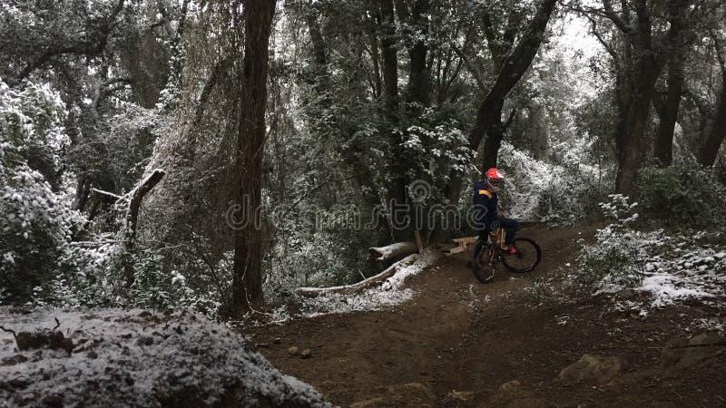Dowhnhill en un bosque en un día de la nieve imágenes de archivo libres de regalías