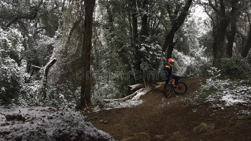 Dowhnhill in a forest in a snow day royalty free stock images