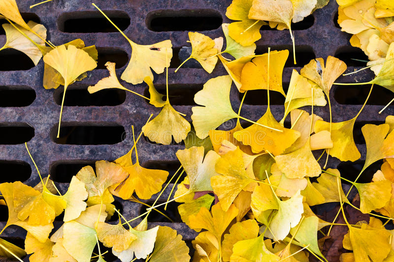Download Down the drain stock photo. Image of leaves, melancholic - 27186458