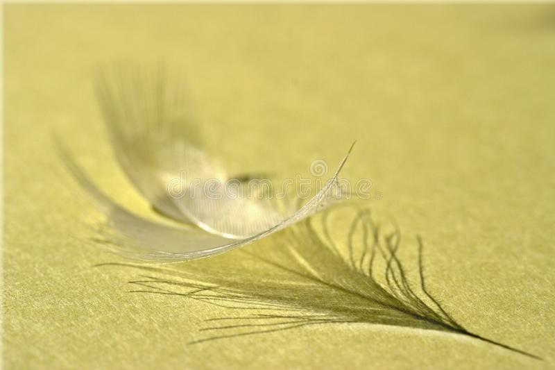 Down feather royalty free stock photo