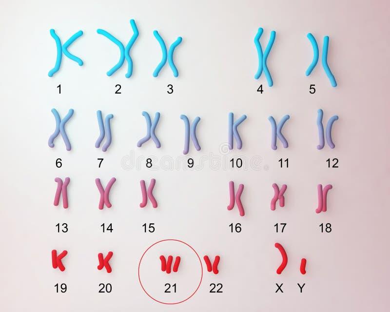 Down-syndrome karyotype. Male labeled. Trisomy 21 3D illustration royalty free illustration