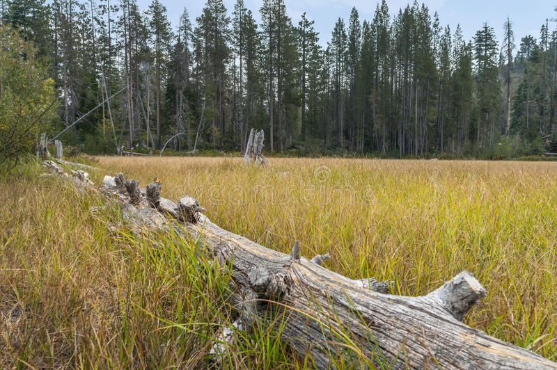 Downed log in a Meadow stock photo