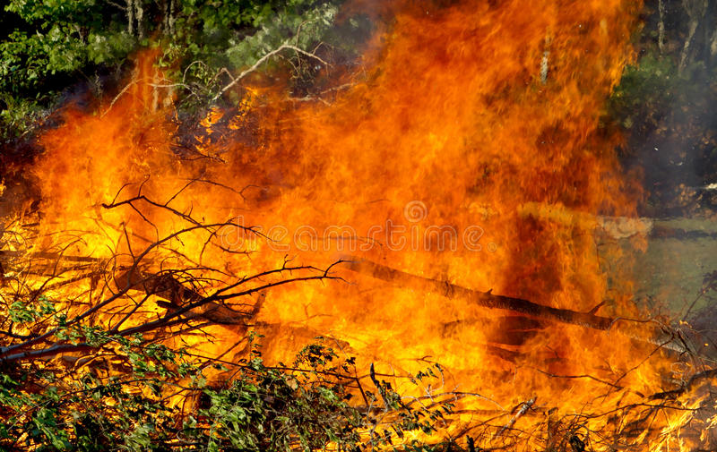 Download Downed trees on fire stock photo. Image of burnt, flame - 16043482