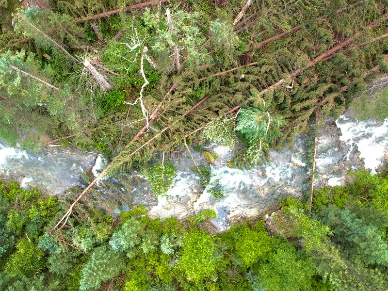 Downed trees over stream in spearfish canyon after tornado lands in forest drone photo royalty free stock images