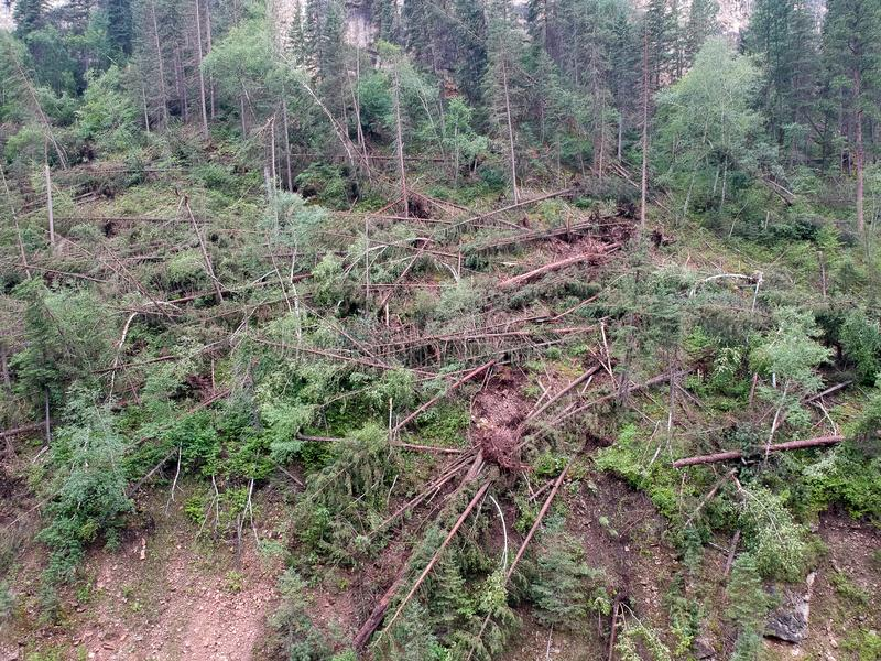 Downed trees in spearfish canyon after tornado lands in forest drone photo stock images