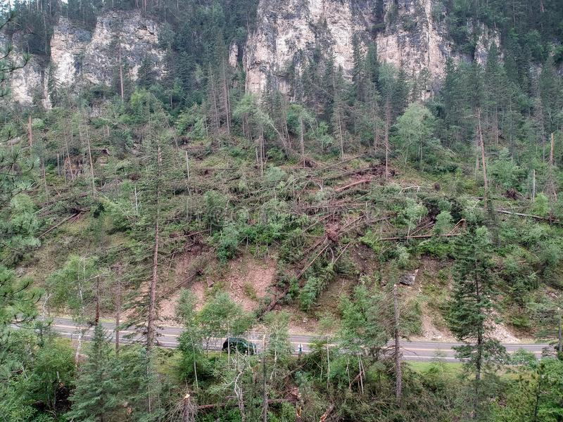 Downed trees in spearfish canyon after tornado lands in forest drone photo stock photo