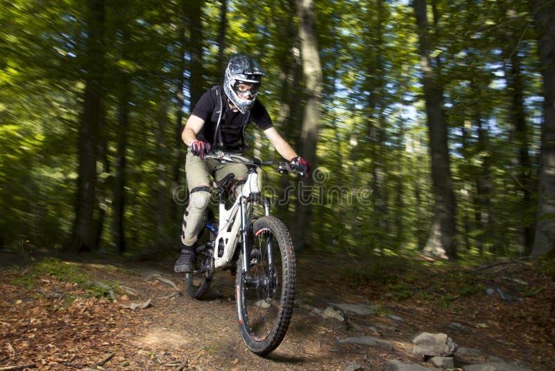 Downhill Biker Royalty Free Stock Photo