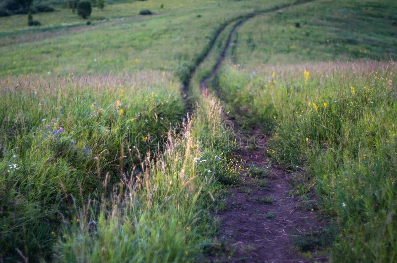 Downhill country dirt road winding in tall grass in Altai Mountains, Kazakhstan, at dusk stock photo