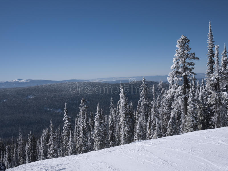 Downhill skiing royalty free stock images