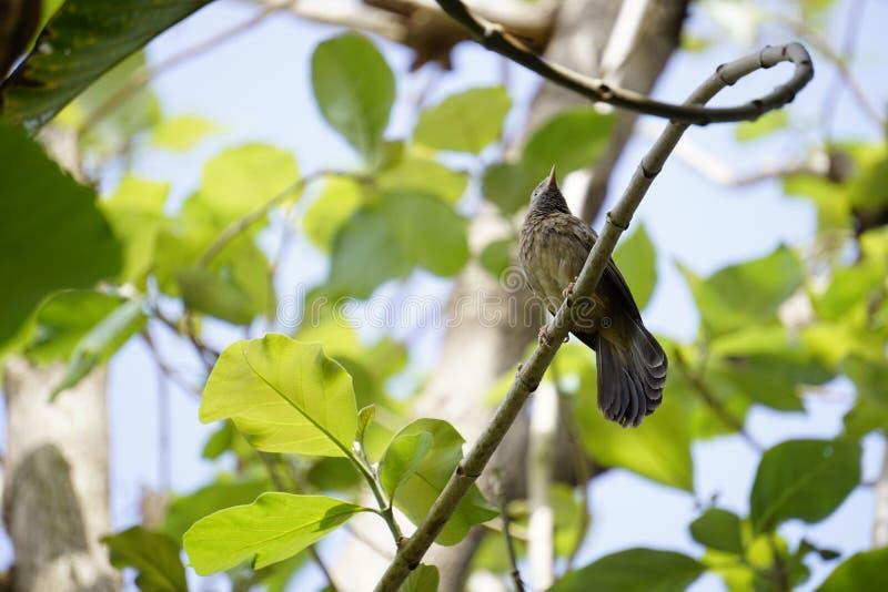 Download het beeld en het gebruik van Indiase vogels voor commerciële doeleinden royalty-vrije stock fotografie