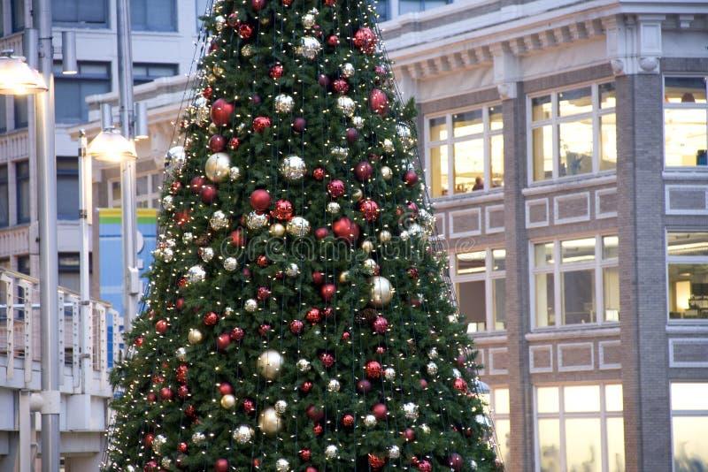 Downtown Christmas tree royalty free stock photos