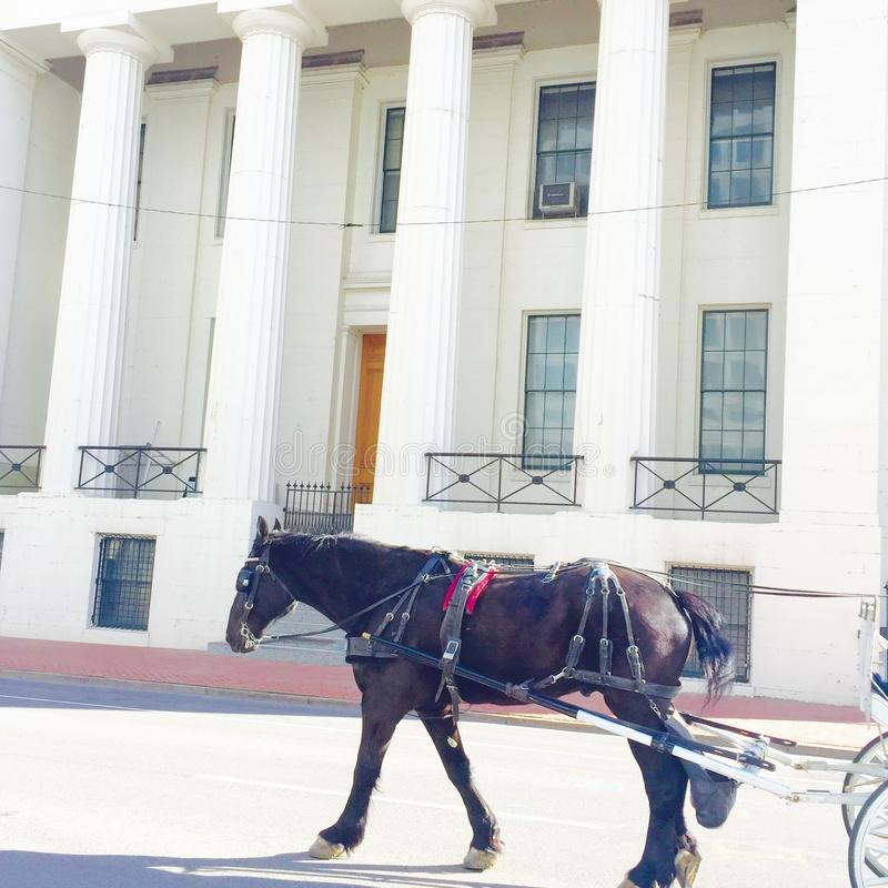 Downtown horse rides stock photography