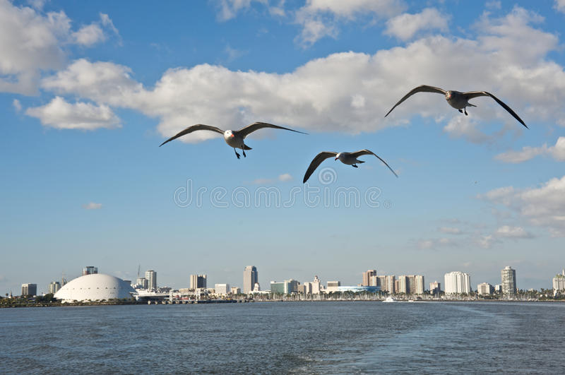 Downtown Long Beach. Panoramic of Downtown Long Beach, California, from a boat. Seagulls follow the boat stock photo