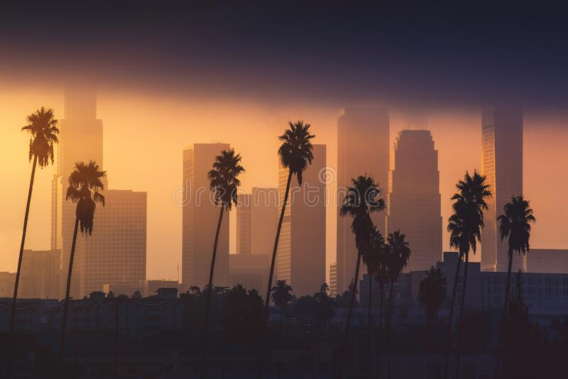 Downtown Los Angeles skyline in foggy morning sunlight. Palm tree in front, skyscrapers in background. Background image. royalty free stock images