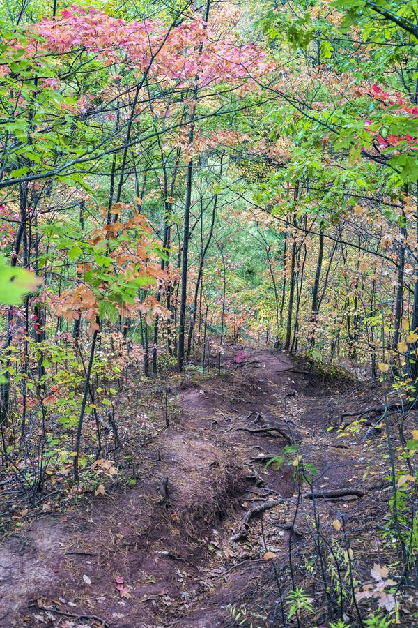 Downward path through autumn woods with tree roots exposed, vibrant fall colors. Vertical composition stock images