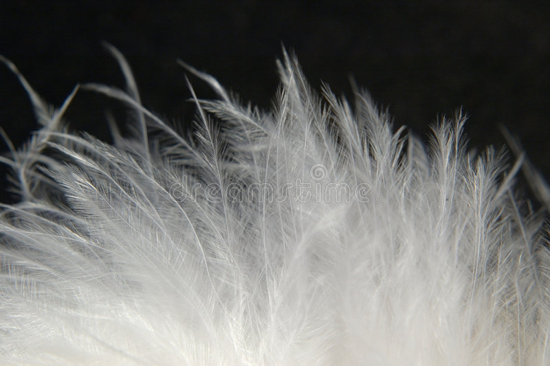 Downy Feathers 1. Closeup of downy feathers, highly detailed, fine texture, black background stock photos