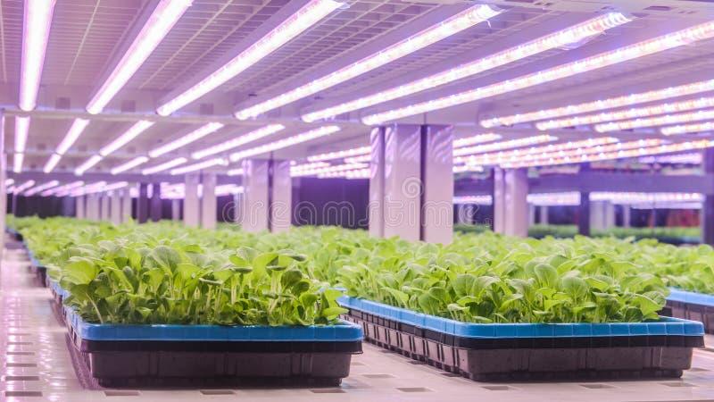 Dowodzona roślina przyrosta lampa używać na rozsadach fotografia royalty free