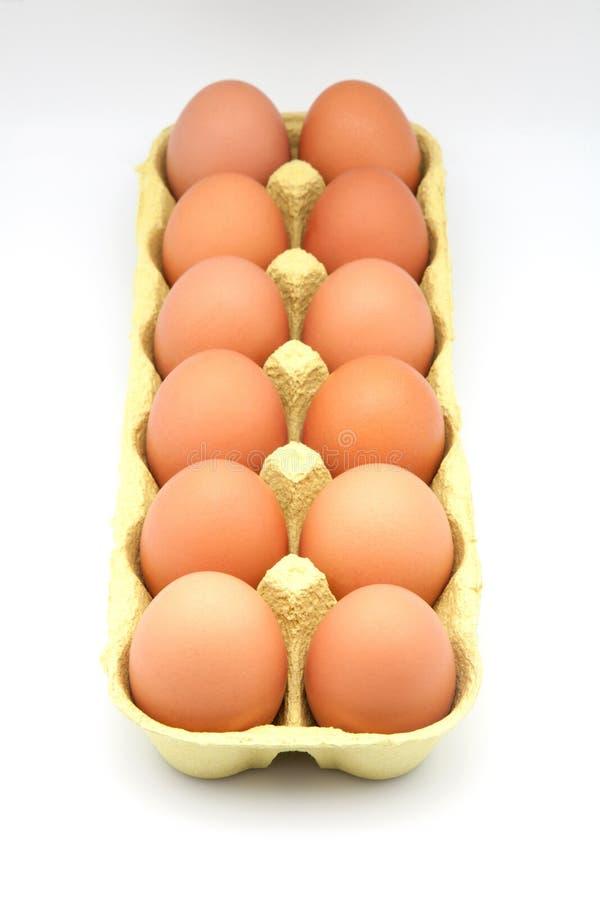 Dozen chicken eggs. In a cardboard box stock image