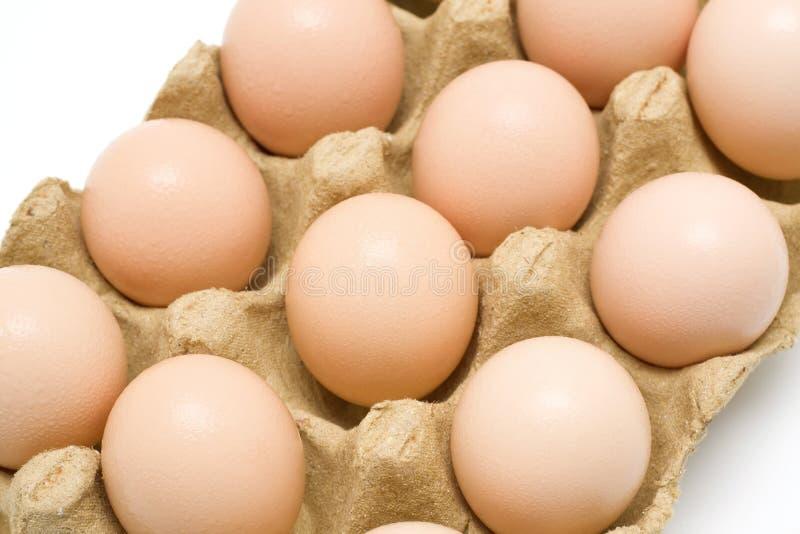 Dozen eggs. Fresh dozen of eggs in paper plate stock photo
