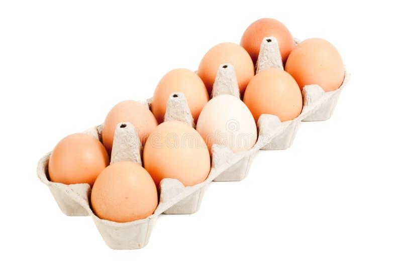 Dozen eggs. Isolated on white royalty free stock photo