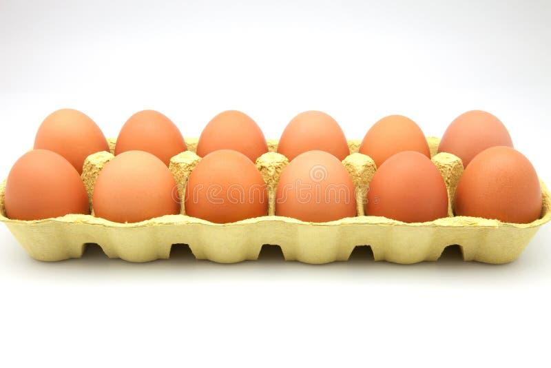 Dozen eggs. In cardboard box royalty free stock images