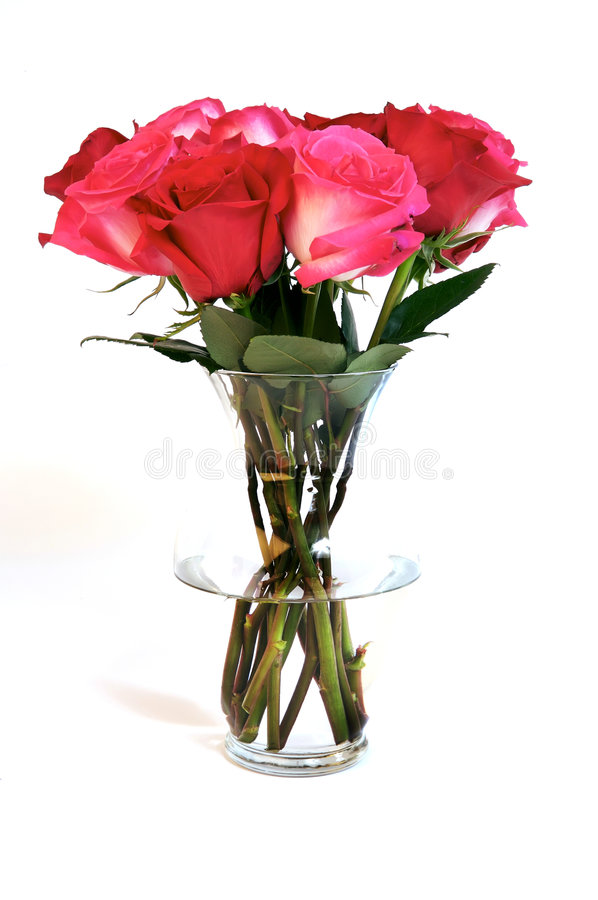 Dozen Red and Pink Roses for my Valentine stock photography