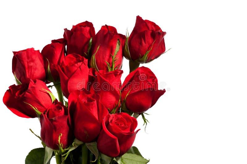 Dozen Red Roses. Isolated on white background stock photo