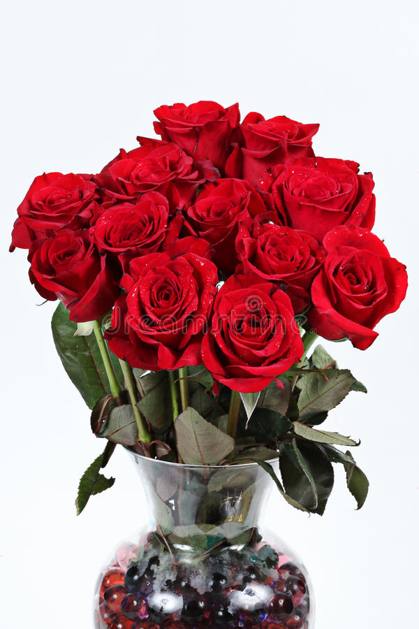 Dozen red roses stock photography
