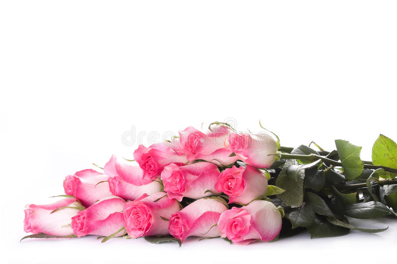 Dozen of roses. Isolated on wijte royalty free stock photos
