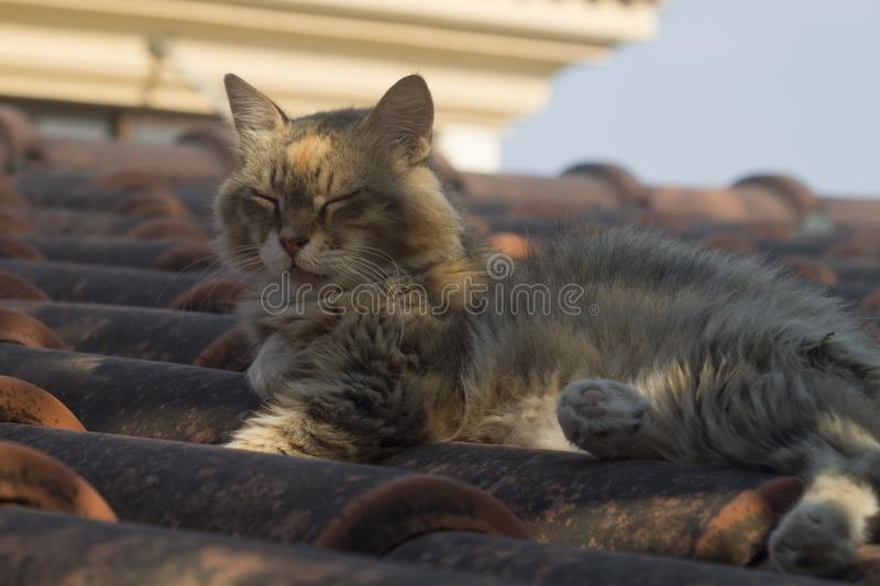 Dozing cat on tiled rooftop. Fluffy tabby cat with long whiskers dozing on a brown tiled rooftop in the soft sunlight royalty free stock photos