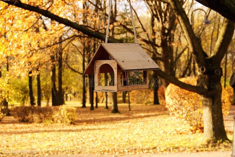 Dozowniki dla ptaków na drzewie w jesień jawnym parku zdjęcie royalty free