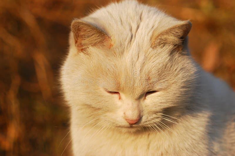Dozy cat royalty free stock image