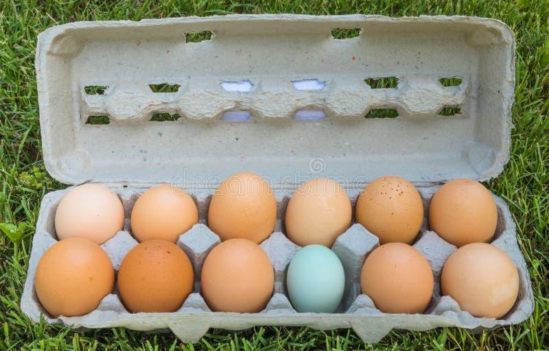 Dozzina uova - una di queste cose non è come le altre fotografie stock libere da diritti